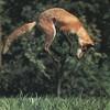 Philothea Fox