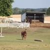 Explore Tri Equestrian's Profile