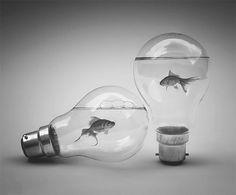 Vinylbird #product #design #fish