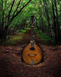 growing guitar #grow #guitar #instrument #plant