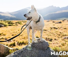 MAGDOG: Magnet Activated Dog Collar, Harness, and Leash System