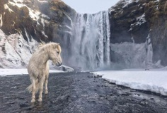 Wild Iceland by E. Arencibia