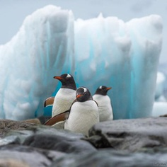 Amazing Wildlife Animals Portrait Photography by Jon Langeland