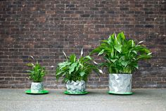origami-pot that grows with the plant