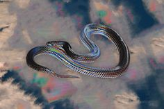 http://off-the-wall-b.tumblr.com/tagged/animalistic #animal #snake
