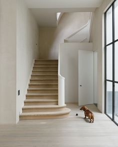#Dachshund stands before #classicstairway. #VVDIIResidence by #VincentVanDuysen. Photo by #DavidSpero. #classic #woodenfloor #plankfloor #s