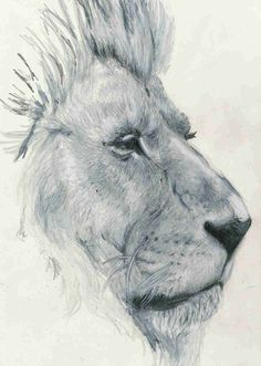 Junk Funk #lion #drawing #illustration #study #pencil #sketch