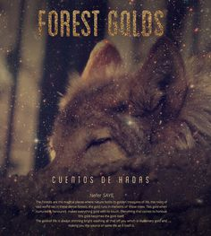 Forest Golds #wolf #forest #wild #nature #life