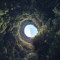 by HabitForming #forest #nature #hole