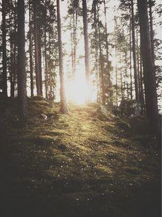Merit Badge #photo #trees #sunlight