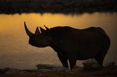 850_5441 Rhino Sunddown