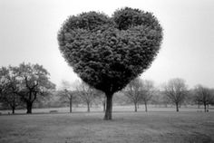 tumblr_ly93nznw561qza249o1_400.jpg 400×268 pixels #three #nature #love