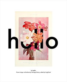 hello poster #text #overlapping #poster #hello #type #postcard #collage #flowers