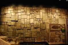 Utah Field House of Natural History Museum Vernal 11 Aug 2010 (7) #wall #texture #museum