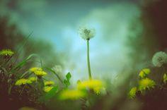 Photography by Simon Flint #inspiration #photography