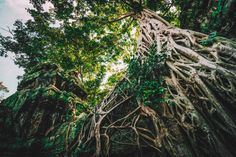 #cambodia #place #nature #tree #green #landscape