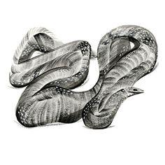 pingszoo #illustration #snake