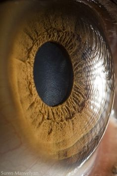 Your beautiful eyes on the Behance Network #malveyan #eye #photography #suren #macro