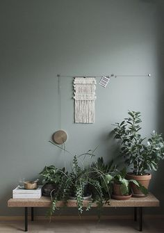 #plants #interior