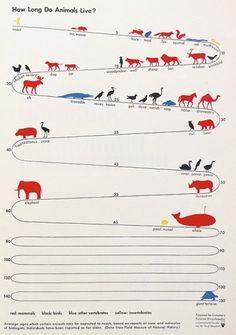 We Love Infographics — How long do animals live? byOtto Neurath #dataviz #infographics #otto #we #illustration #isotype #love #science #neurath