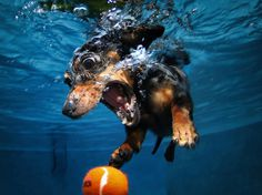 Underwater Dogs #emotion #ball #photography #swim #underwater #epic #dog