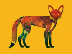 Fox Illustration #illustration #fox #perryman