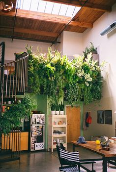 Spaces #decoration #plant #spaces