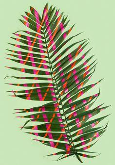 »Wonderplants«