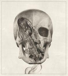 Sam Green | Illustration Studio