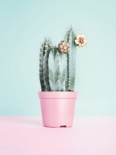 Free as a Bee via http://shoplauracantu.com/ #cactus