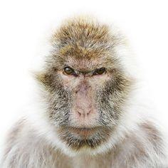 Animal Portraits on the Behance Network