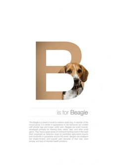 Dog Alphabet – Dog Breeds In Alphabetical Order