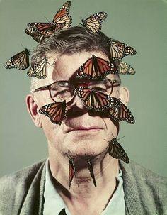 FFFFOUND! #collage #butterfly