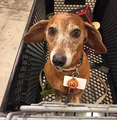 Most Dog Friendly Stores in America - William Sonoma