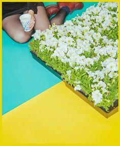 Jimmy Marble #flowers