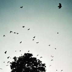noel richter.photoblog #wabi #bureau #photography #richter #noel