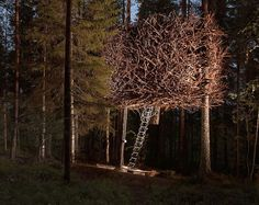 The Bird's Nest, Sweden