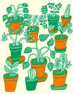 Marcus Oakley #plants