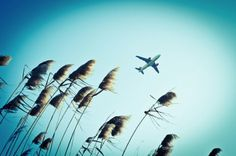 Bird Hunter by Dani Garcia Sarabia » Creative Photography Blog #photography