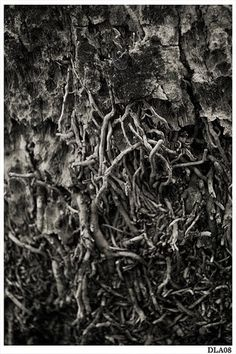 All sizes | Earth | Flickr - Photo Sharing! #white #tree #close #black #digital #photography #up #textures #and