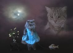 the best picture on the internet #portrait #cat