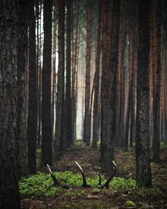 Breathtaking Forest Photography by Jakub Wencek