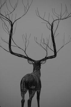 tumblr_lzjbp4K0Hh1qjiz8bo1_500.jpg (500×750) #deer