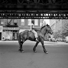love this photo. #photography #giant #horse #image