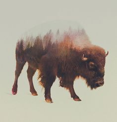 Double-Exposure Animal Portraits By Norwegian Photographer #illustration #buffalo