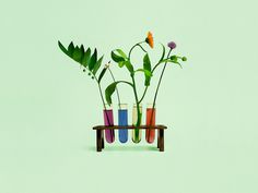Still life photography by Bond for Finnish health store PÜR #flower #photography #colour