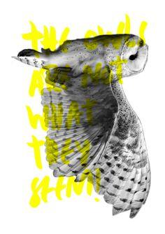 I'm not a hipster #silkcreen #fluo #owl #hipster #notebook