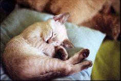 tumblr_ll89buQFBd1qacssno1_500.jpg (500×336) #cat
