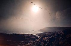 cole rise #ocean #birds #photography #rise #cole