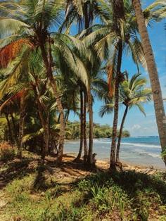 Caribbean Island Life #caribbean #island #beach #tropical #palmtrees #summer #travel #panama